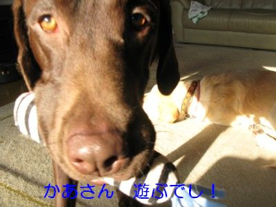 IMG_0024_20091212211003.jpg