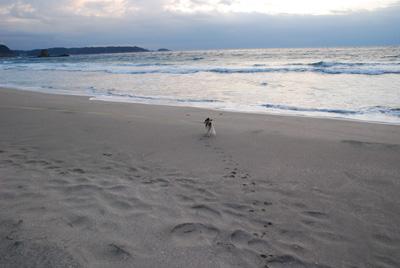 海へと向かうラナ