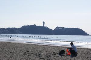 2010.04.18湘南の犬