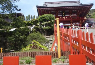 鎌倉 大銀杏1