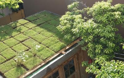2010  小屋の屋根 デージー
