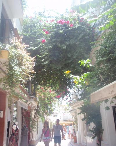 マルベーリャ 通りの花 2