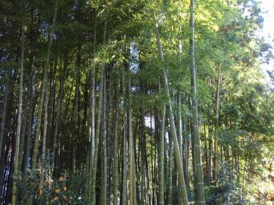 2010.11.7 茨城 竹林