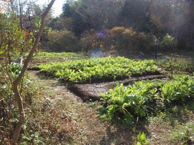 2010.11.7 茨城 畑