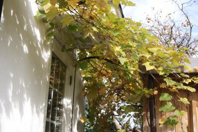 2010.11.20 柿