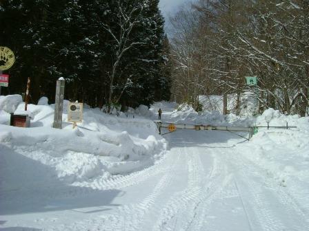 除雪されていた林道