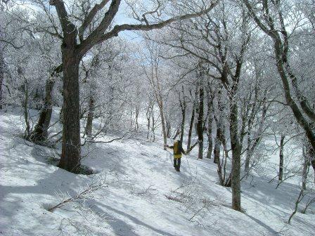 樹氷の中を行く