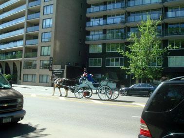 NYの馬②