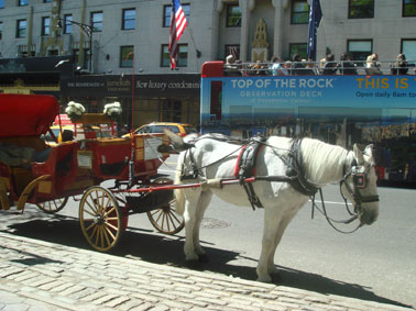 NYの馬①