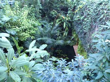 夢の島熱帯植物館⑩