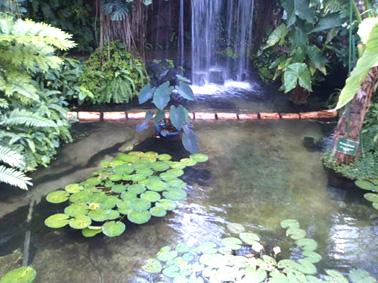 夢の島熱帯植物館③