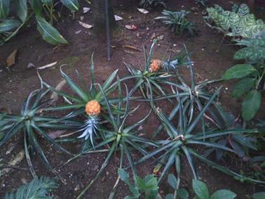 夢の島熱帯植物館⑤