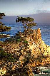 170px-Lone_Cypress.jpg