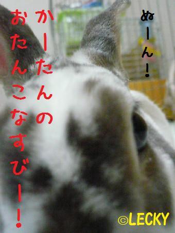 s1150897.jpg