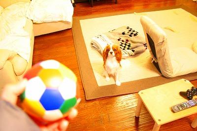 あ!ボール!
