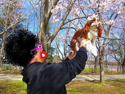 ほおら、桜だよぉ~
