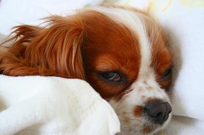 熟睡してるので、目がイっちゃってます。