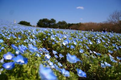 空と花の境界線が・・・