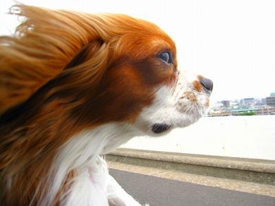 びゅおおおお!すごい風です。