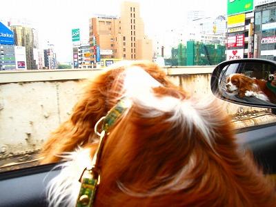 うわー本物の渋谷だぁ~!