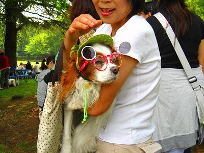 メガネかっこいい!