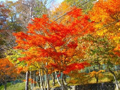 世は春なのに、ブログでは秋まっさかり。www