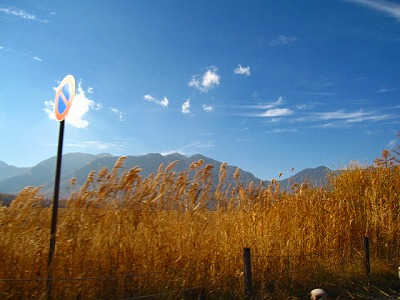 ネバダ州に雑草生やしたみたい。
