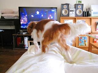 テレビに向かってダーッシュ!