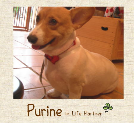 purine