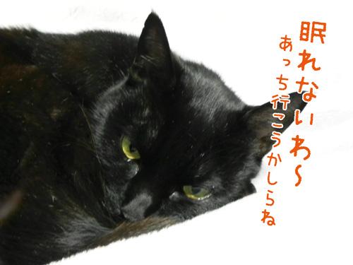 0425_5.jpg