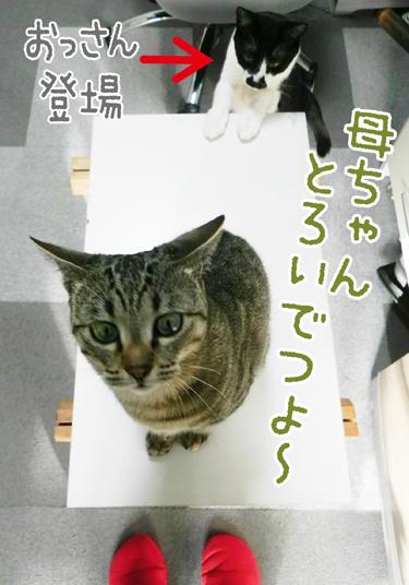 0518_2.jpg
