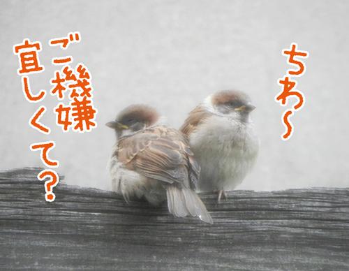 0520_4.jpg