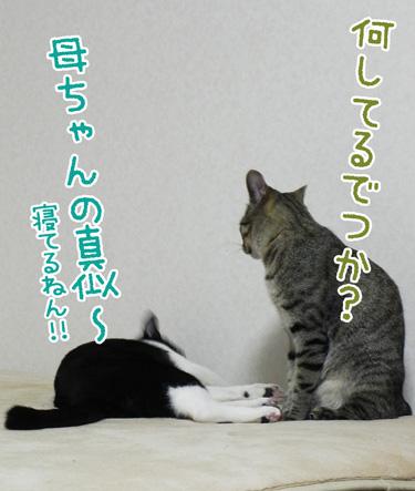 0603_3.jpg