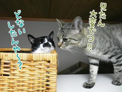 0729_2.jpg