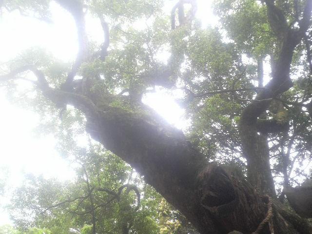 o0640048010540858482,古屋っち春日の木