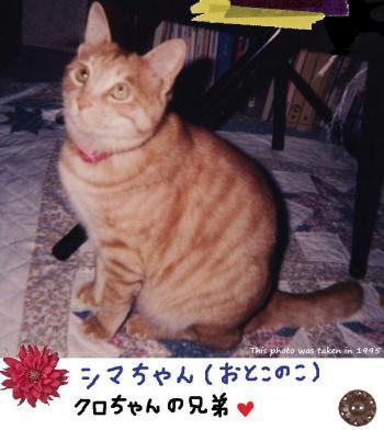 シマちゃん#9829;