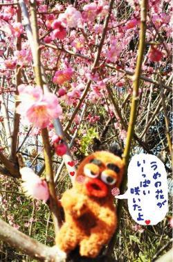 びすきぃと梅の木2#9829;