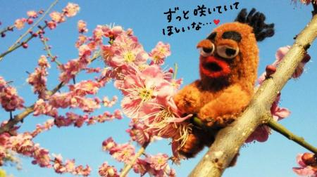 びすきぃと梅の花5#9829;
