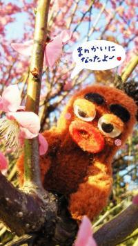 びすきぃと梅の花3#9829;