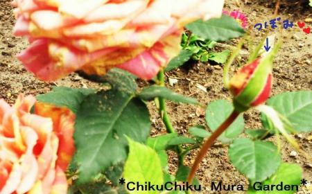 つぼみが咲いたよ#9829;