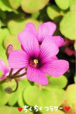 きれいなお花さん#9829;