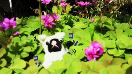 お花が大好き2#9829;