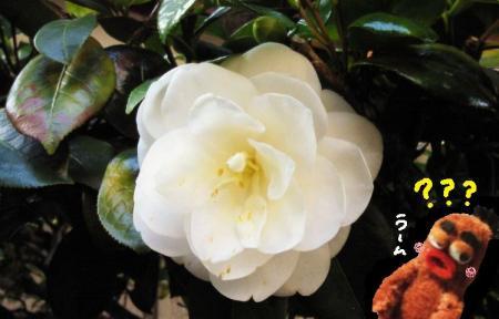 白いお花#9829;