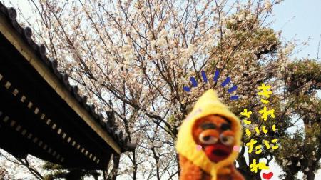桜が咲いたね#9829;