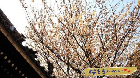 桜#9829;