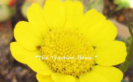 新しいお花が咲いたよ#9829;