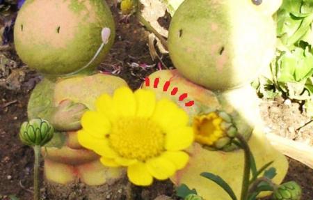 新しいお花が咲いたよ2#9829;