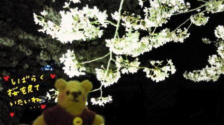 メイプルくんと桜#9829;