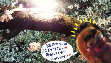 びすきぃと桜#9829;