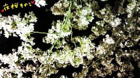 夜桜3#9829;